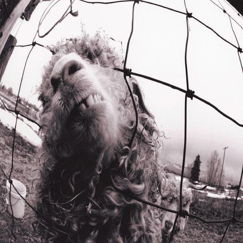 Pearl Jam vinyle